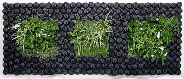 Inspiration pour un mur végétal dans votre appartement