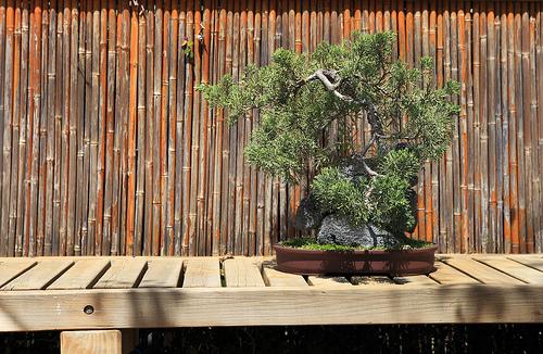 Un potager pour votre balcon comment cr er un jardin zen - Plantes pour jardin japonais ...