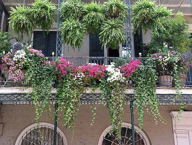 Un potager pour votre balcon les conseils des pros du for Jardiniere pour plante grimpante