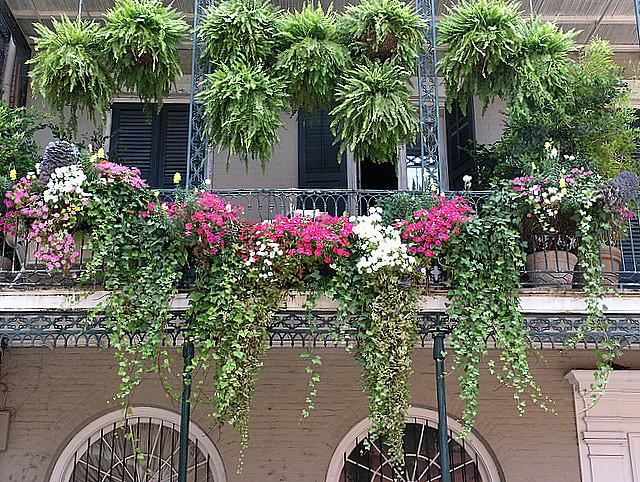 Plante retombante pour balcon for Plante exterieur pour balcon