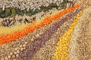 Plusieurs graines