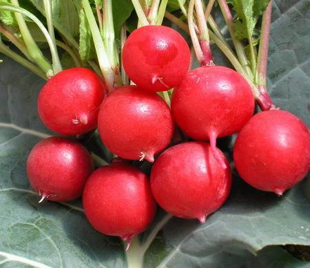 Planter des tomates cerises - Quand planter un cerisier ...