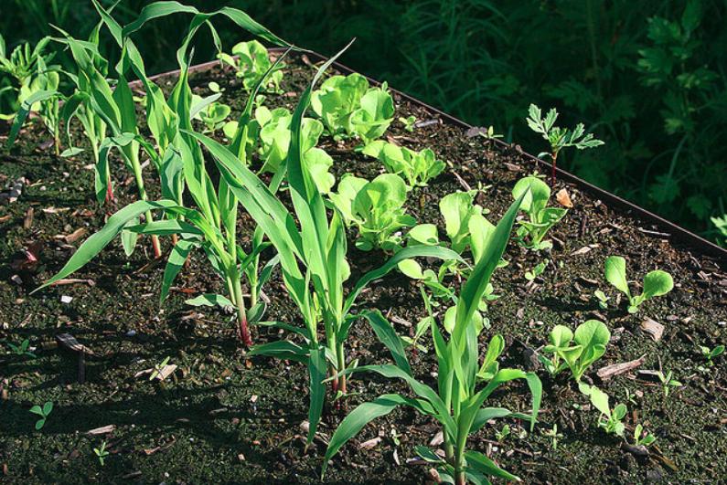 Comment planter des légumes sur son balcon?