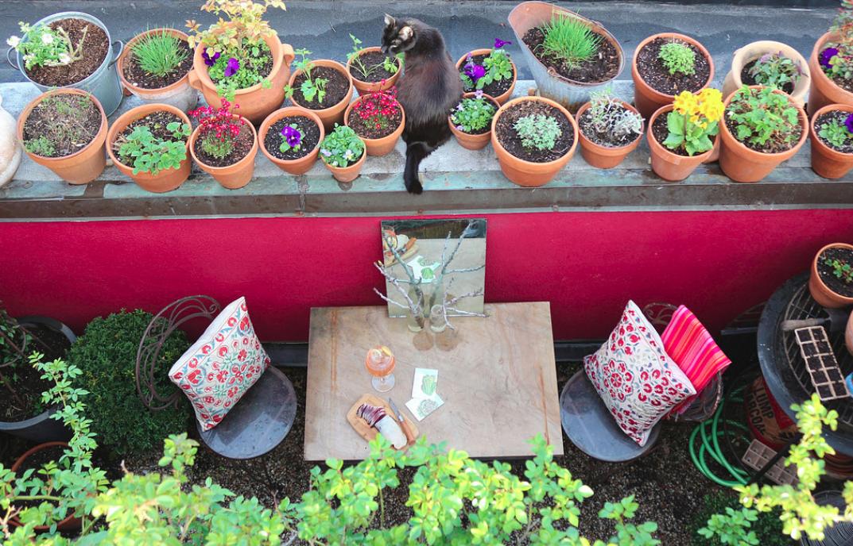 un potager pour votre balcon cultiver des primev res comestibles. Black Bedroom Furniture Sets. Home Design Ideas