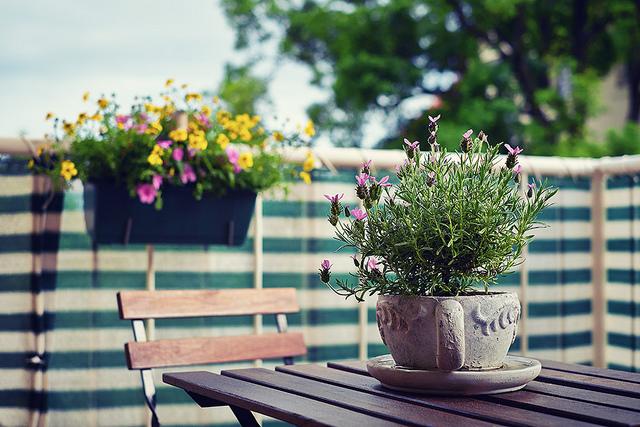 un potager pour votre balcon conseils pour faire pousser de la lavande. Black Bedroom Furniture Sets. Home Design Ideas