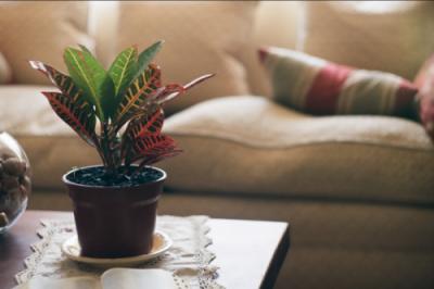 Des plantes dépolluantes pour les pièces intérieures