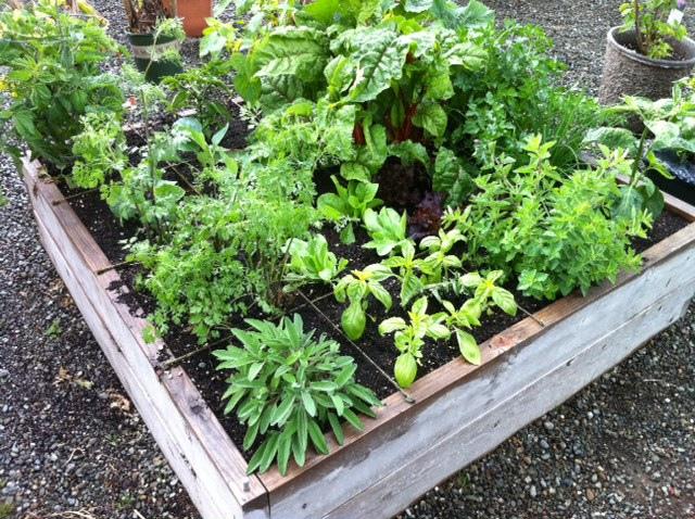 Commencer à jardiner dans un carré potager