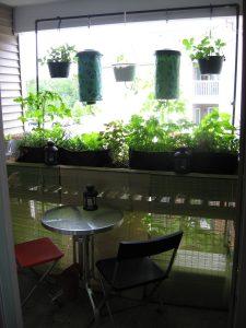 Balcony Garden - June, 2009