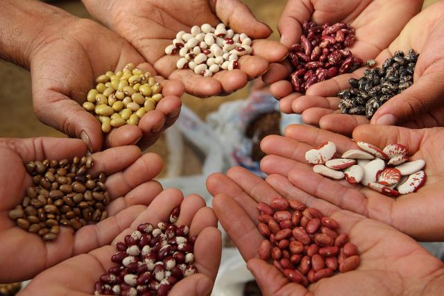 Conservez vos graines