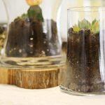 Fabriquer votre propre terrarium