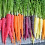 Des carottes de couleur pour les enfants