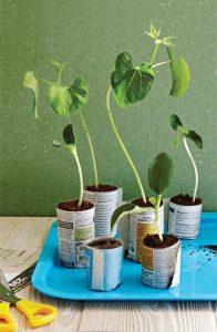 Des plantes dans des pots biodégrables