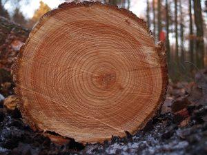 Un arbre tombé = une futur table