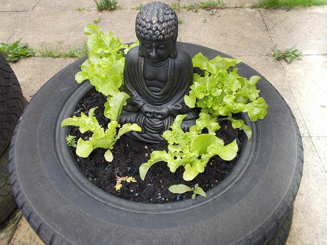 Un pneu, un bhudda et des plants de laitues