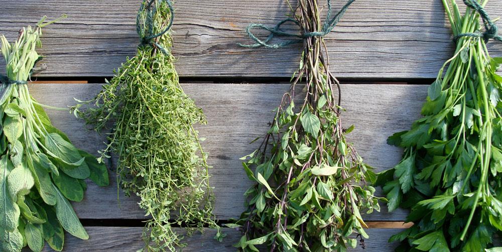 Herbes sechees