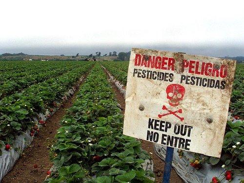 Des pesticides peuvent etre appliques sur les herbes aromatiques