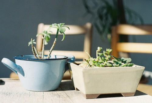 Plantes d'intérieur pour dépolluer