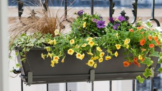 Jardinières sur un balcon